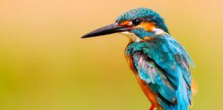 Hoe fotografeer je vliegende vogels