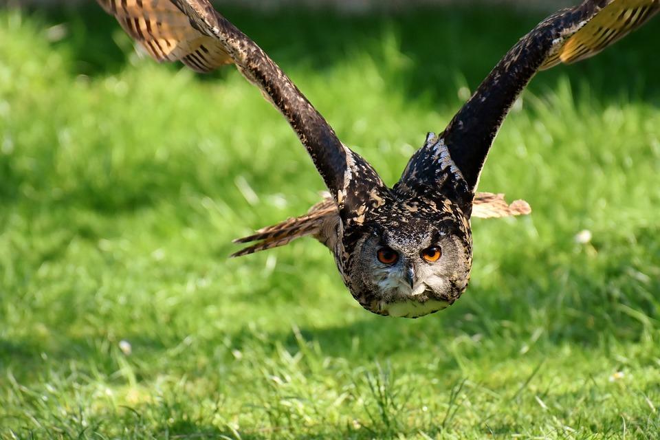 Tips vogelfotografie
