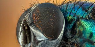 insecten fotograferen
