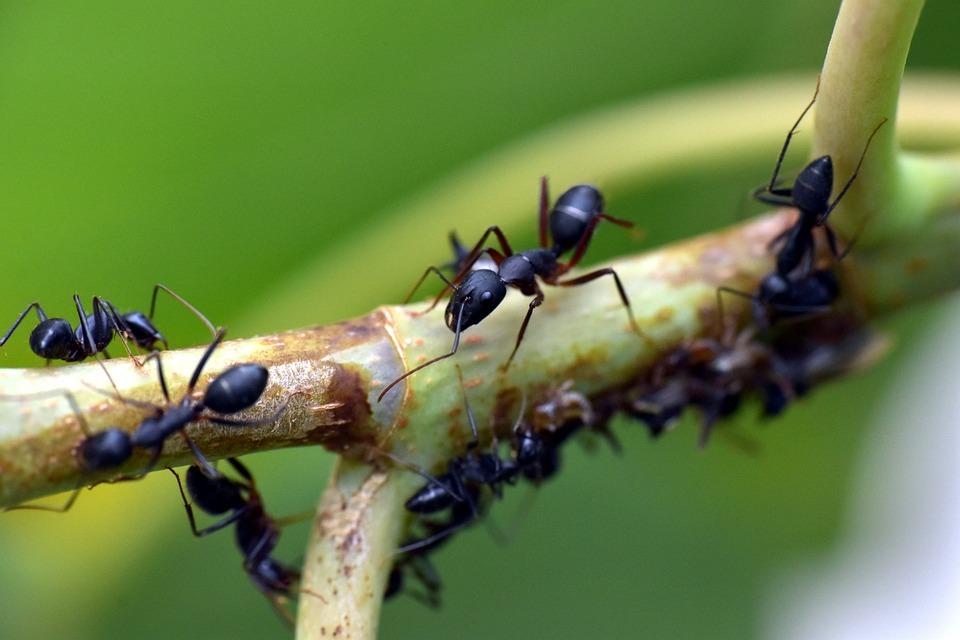 Tips voor insectenfotografie