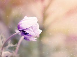 Scherptediepte in bloemenfotografie