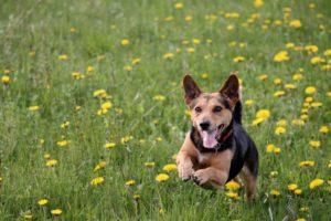 Drukke hond fotograferen
