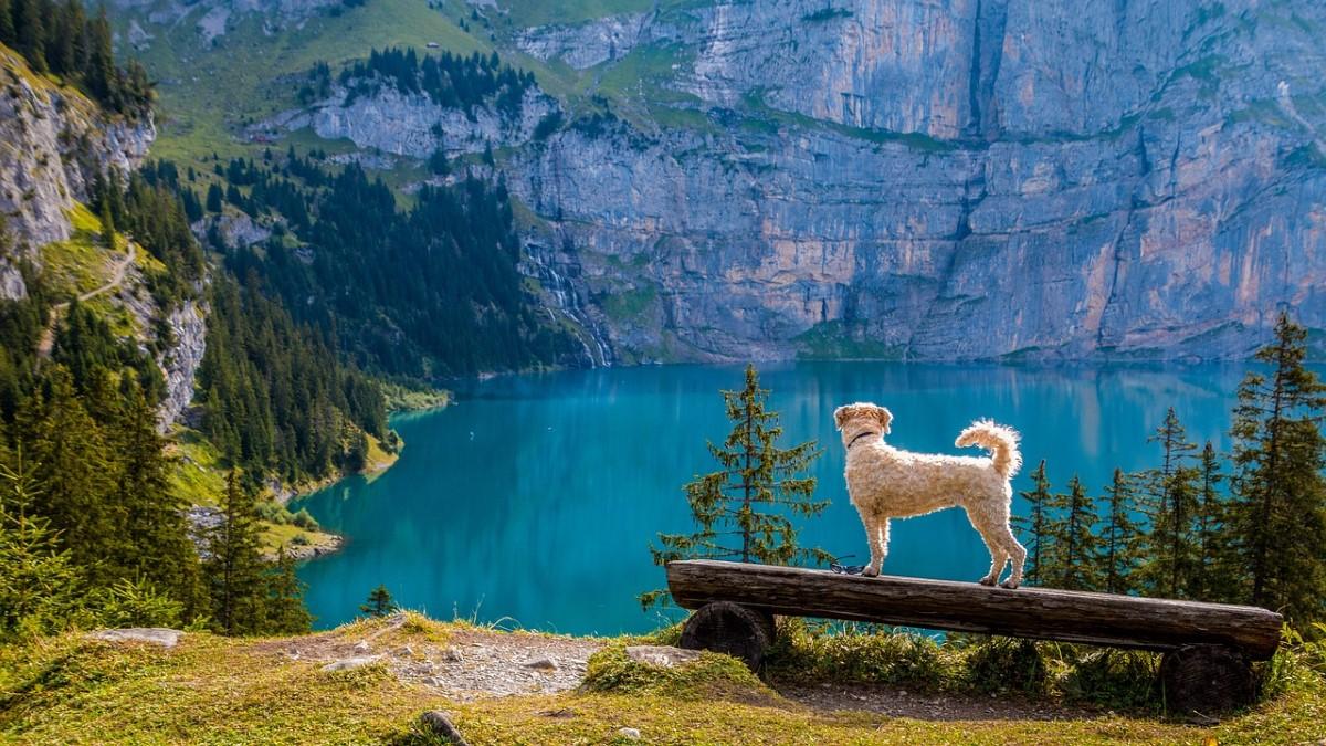 hondenfotografie in de bergen