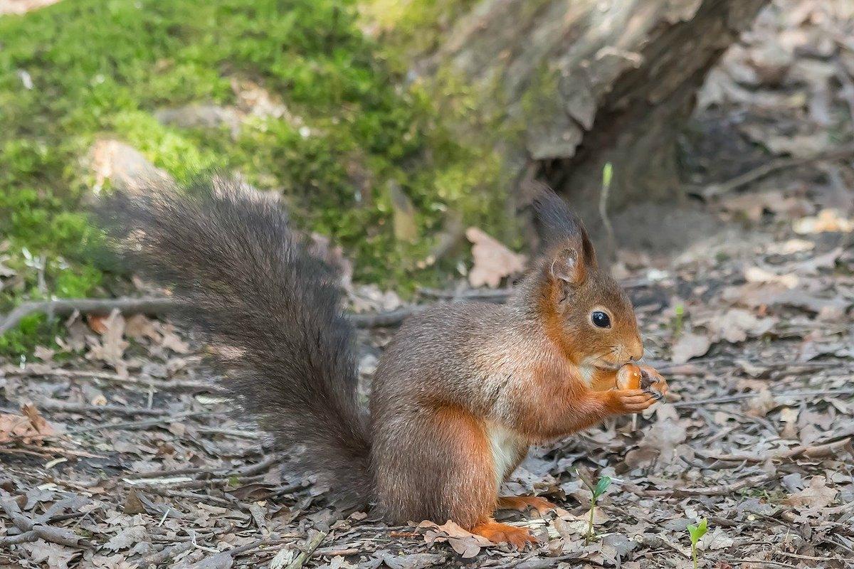 etende eekhoorns