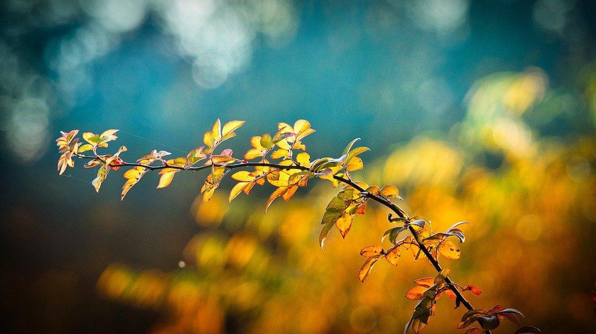 Kleurrijke tak in het bos