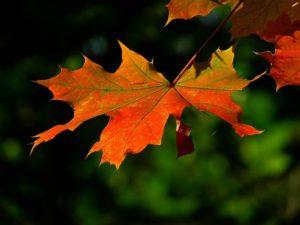 Herfstkleuren fotograferen