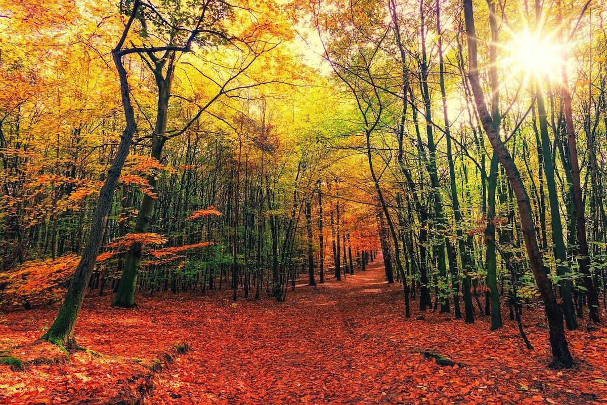 Herfstzon door de bomen