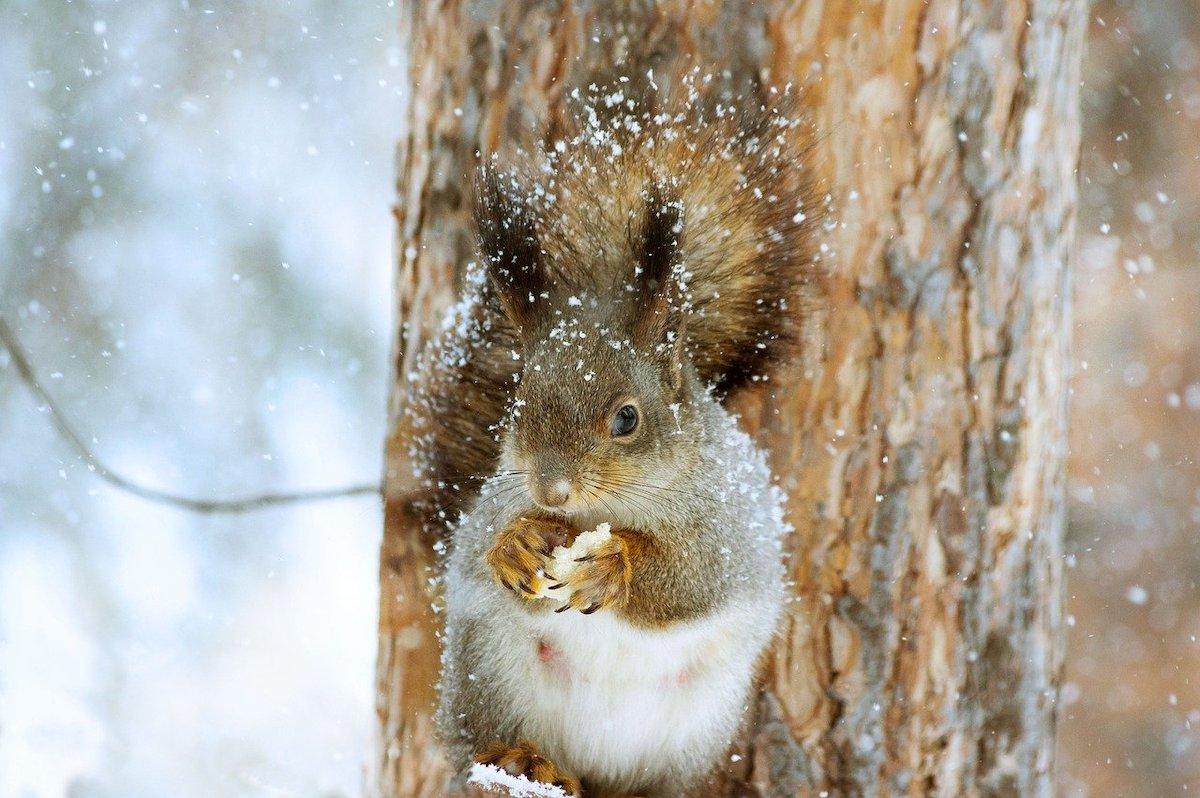 Wilde Dieren sneeuw