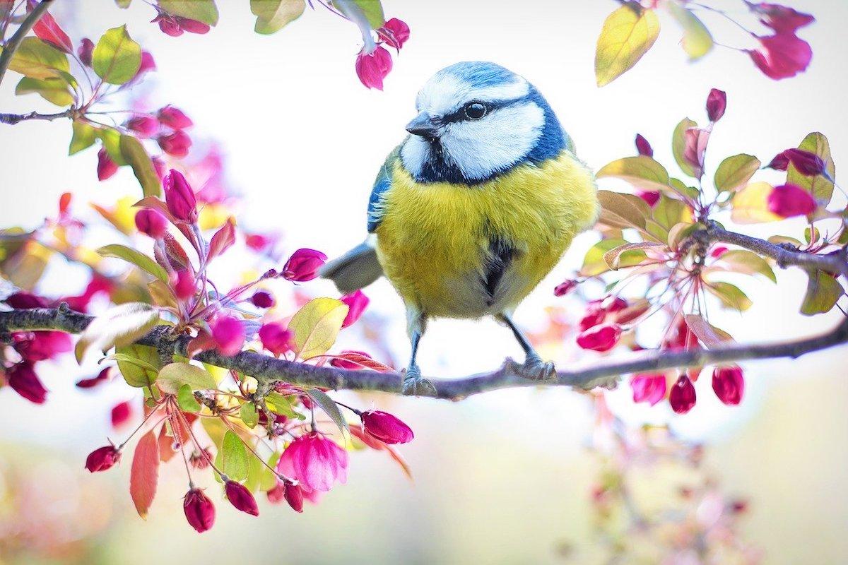 Lente vogel
