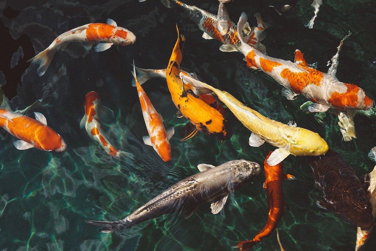 inspiratieloze dagen vissen