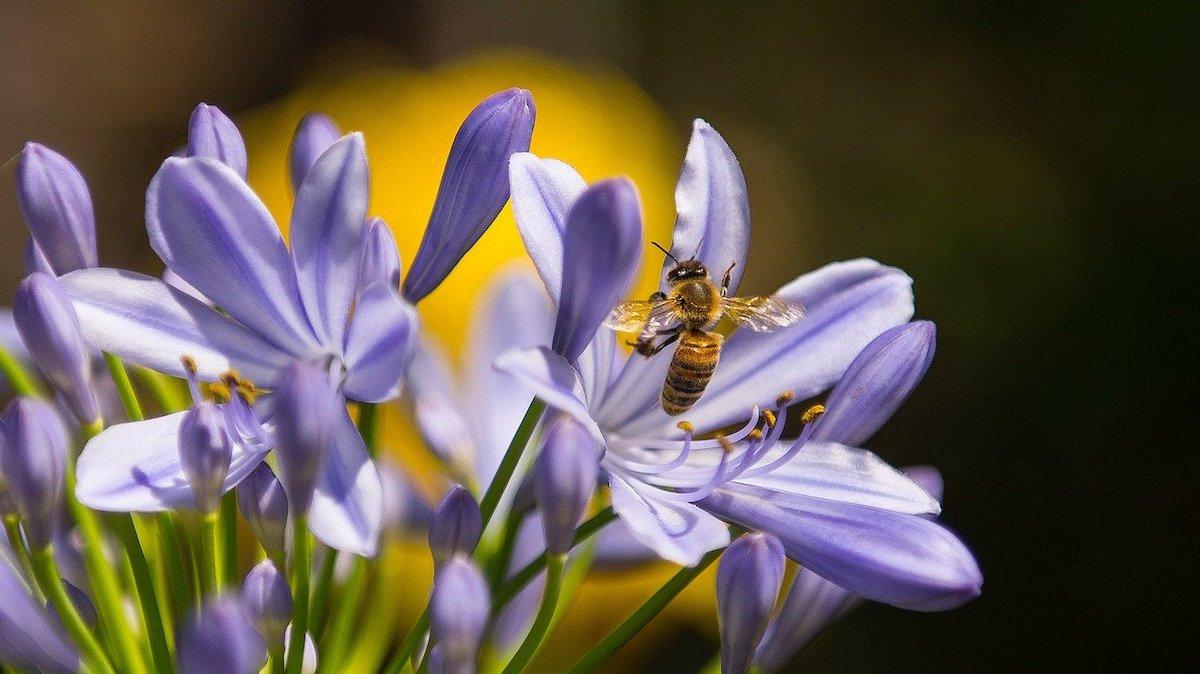 Planten en bloemen voor bijen