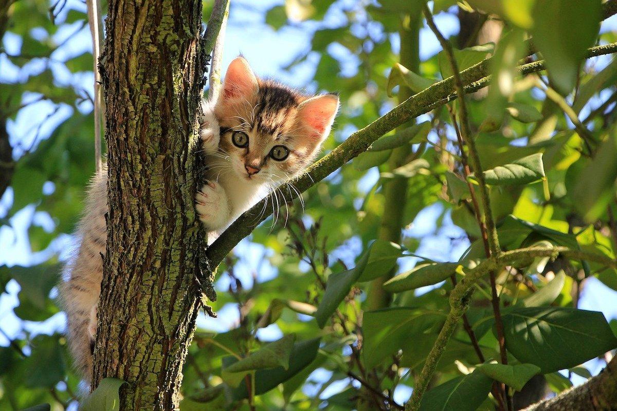 Katten fotograferen door een object