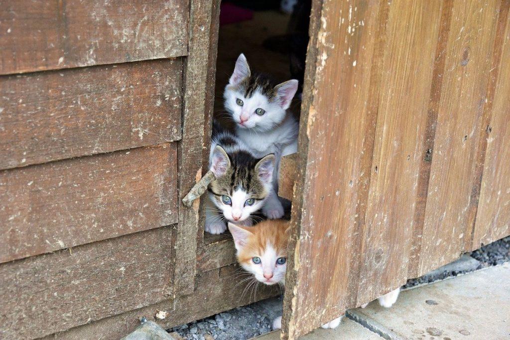 fotograferen van katten