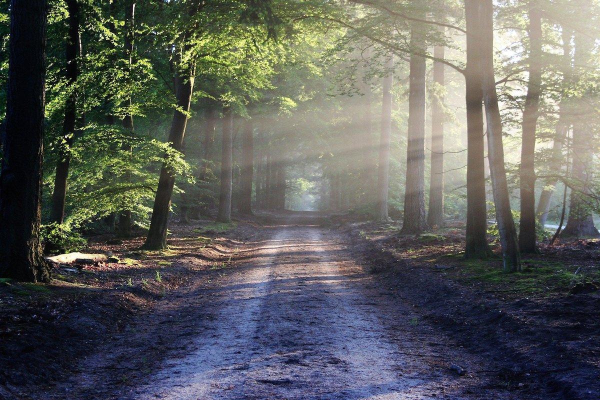 Verlaat het bos zoals je het gevonden hebt