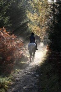 Paardenfotografie in het bos