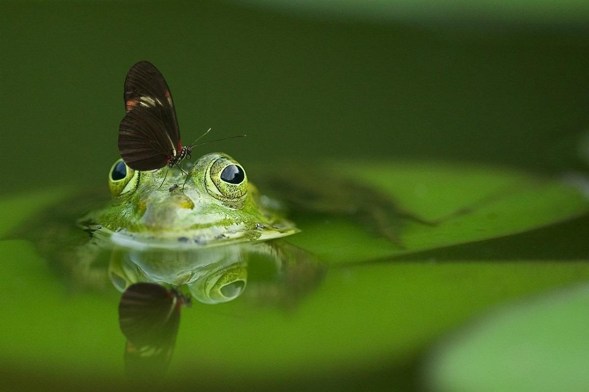 Kikker reflectie fotograferen