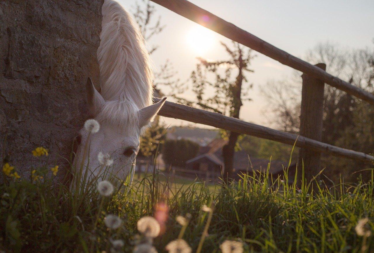 paarden fotograferen in de wei